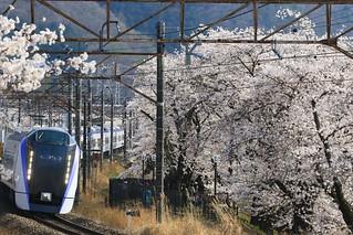 勝沼ぶどう郷の桜と E353系 スーパーあずさ