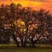 Live Oaks Sunset by TicKavich