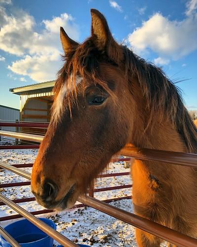 Owen the Mustang