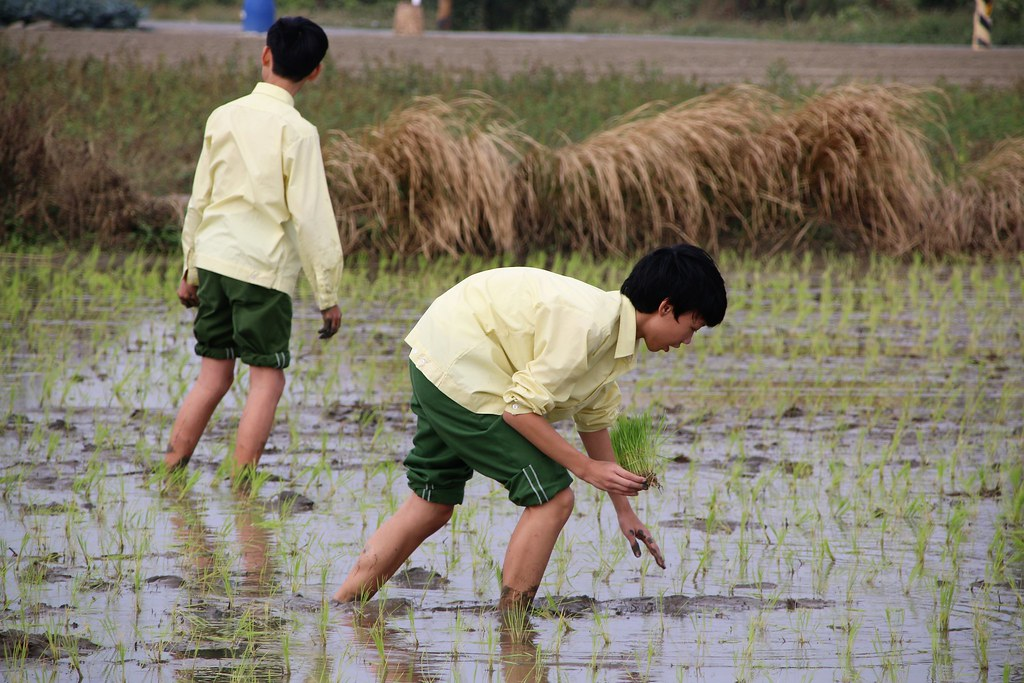 食農教育 (11)
