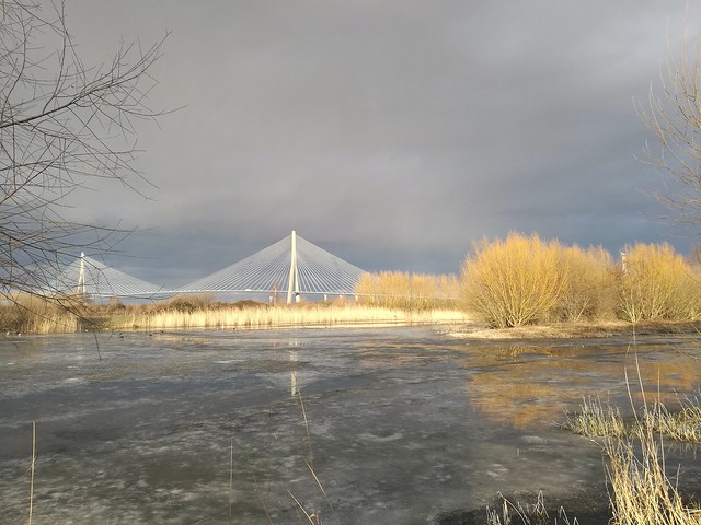 Pont de Normandie , reflex on frozen mare