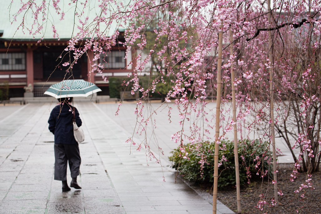 2018-03-22 雨と桜とお寺と 001-3