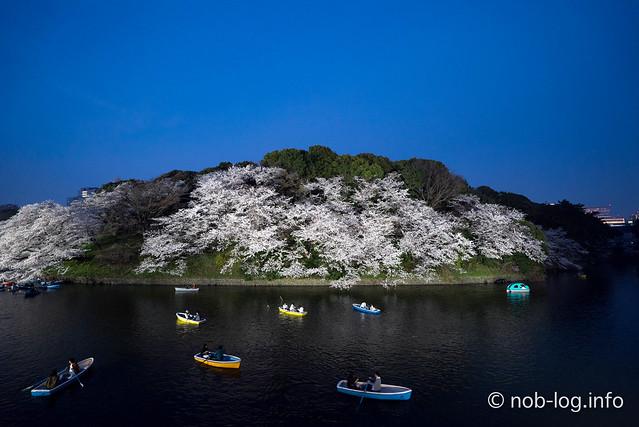 夜桜の千鳥ヶ淵緑道 再び