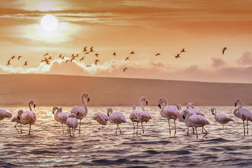 ica nikon nikkor18140mm paracas peru xxtranyerphotogrpahy yoandymxxtranyerrobainafuentes photographer