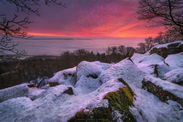 purple winter morning
