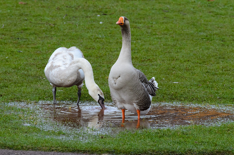 Drinking from the same puddle