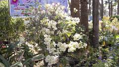 Flowers at Egypt's Spring Flowers Fair 2018