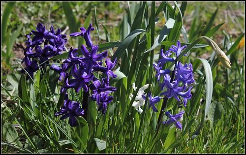 explosion florale - Page 3 40649220525_af0d2c2636