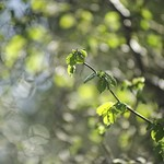 20180421-162246 Spring Green Nature Bokeh