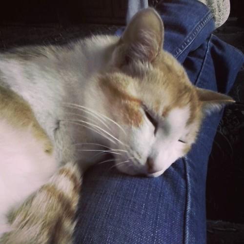 world_wait_Felix_the_cat