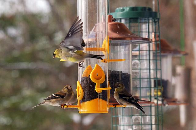Bird feeder action