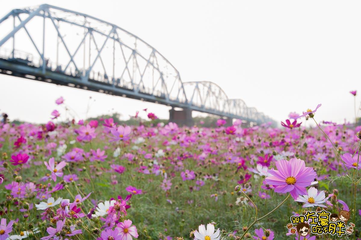 舊鐵橋(屏東端)花海-10