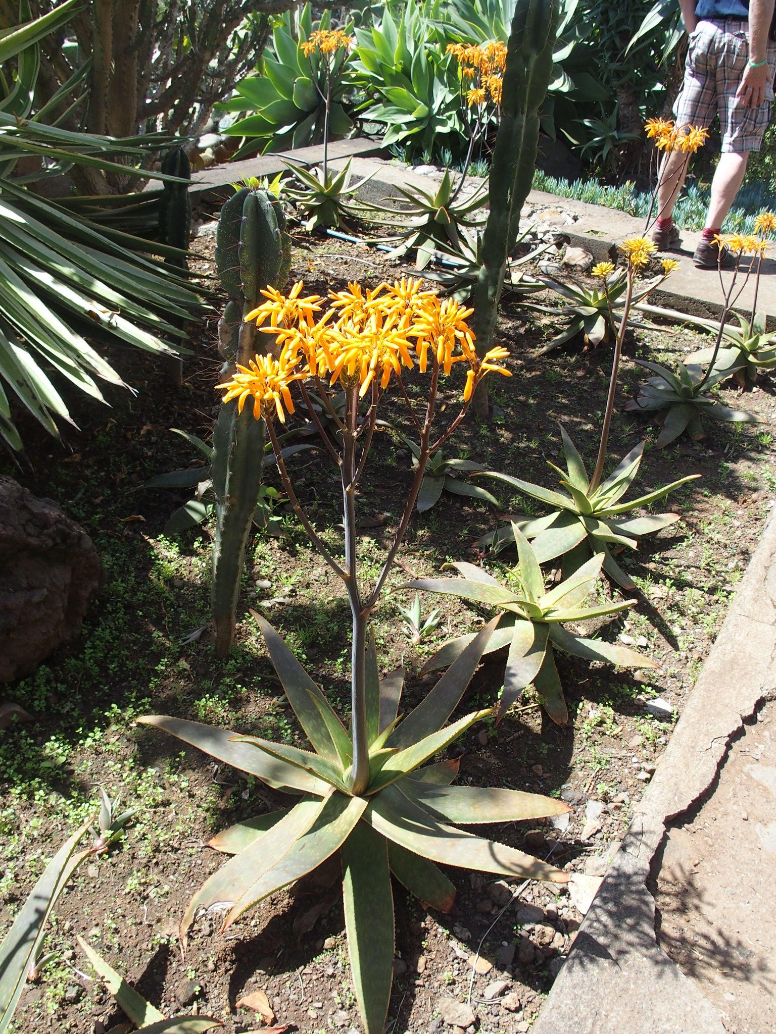Botaniska