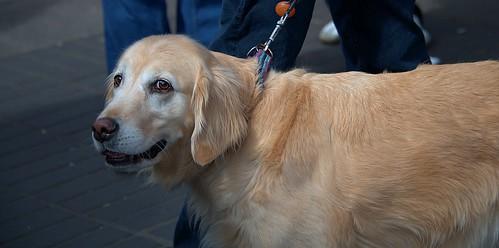 Smiley Face dog