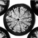 black and white blood oranges