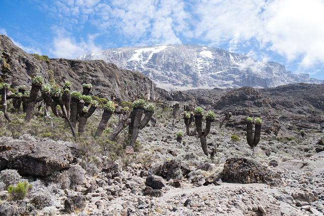 Kilimanjaro - Blog-20