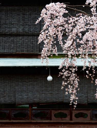 180319_Kyoto-010