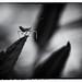 Little Assassin by Anne Worner