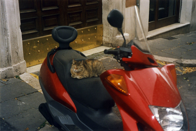 Scooter cat