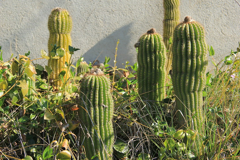 Yes, there were cactus!