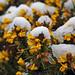 Wintry Flowers
