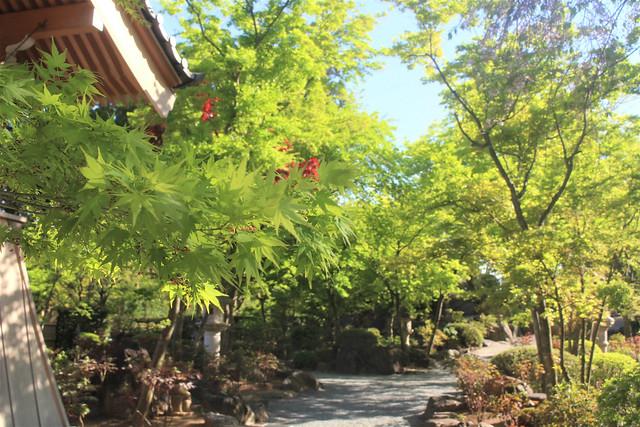 houtokuji-gosyuin04045