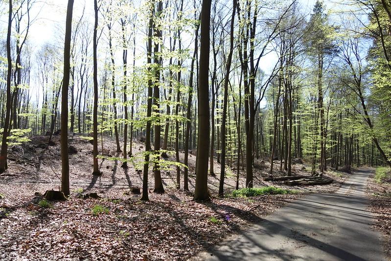 Ein sonnendurchfluteter Laubwald mit jungen grünen Blättern und einem Weg, der sich durchschlängelt.