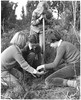 Planting in Nelson for Arbor Day, 1959