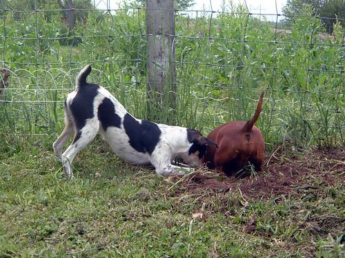 2003-05-15 - DogsOutside-031