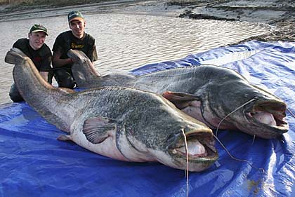 The one that didn 39 t get away third largest catfish ever for What is the biggest fish ever caught