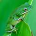 Portrait in Green by Jeff Clow