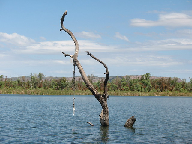 The Swim Beach Tree - Lake Kununurra