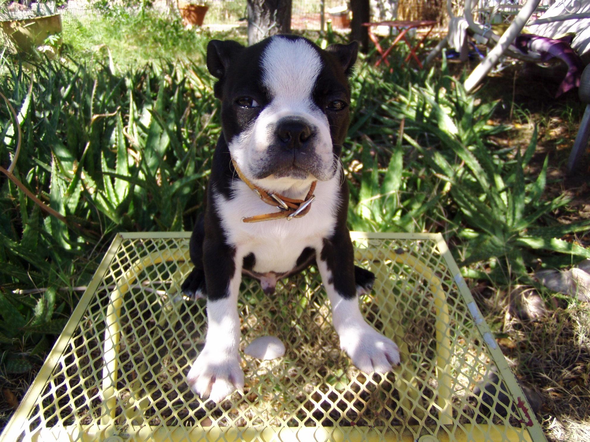 ivan as a puppy, sept. 2004