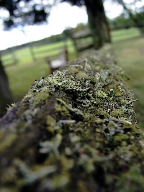 Weather Resistant Red Cedar Split Rail Fences | Hal Co | Northern