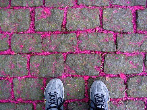 POESIA EM FORMA DE PIXEL - SELFEET no PARQUE LAGE - Fotos desde flickr