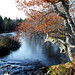 Autumn On The Annis River by brian doucette
