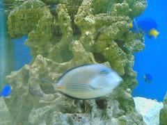 coral(0.0), stony coral(0.0), coral reef(1.0), fish(1.0), coral reef fish(1.0), organism(1.0), marine biology(1.0), freshwater aquarium(1.0), underwater(1.0), reef(1.0), aquarium(1.0),