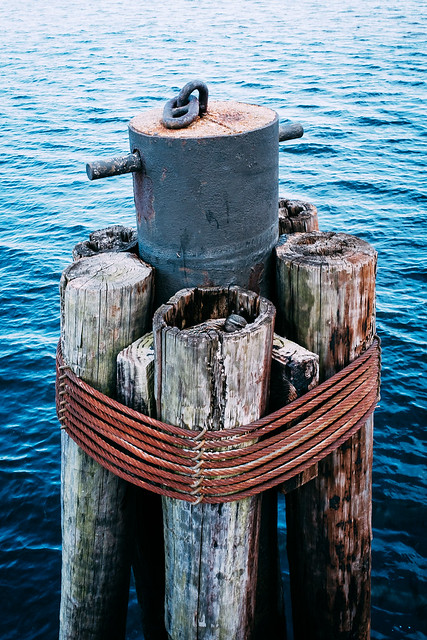 Duck in the piling