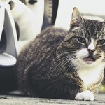 20180420-183009 - Cat Car Bokeh