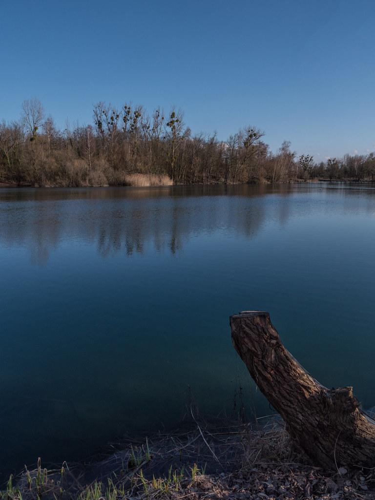 Au bord de l'étang... + recadrage 26989948608_a11b92602f_b