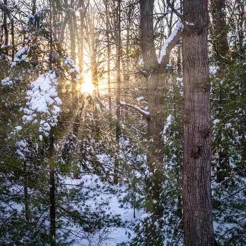 winter sun sunrise forest landscape tree backyard snow dawn elkridge maryland unitedstates us