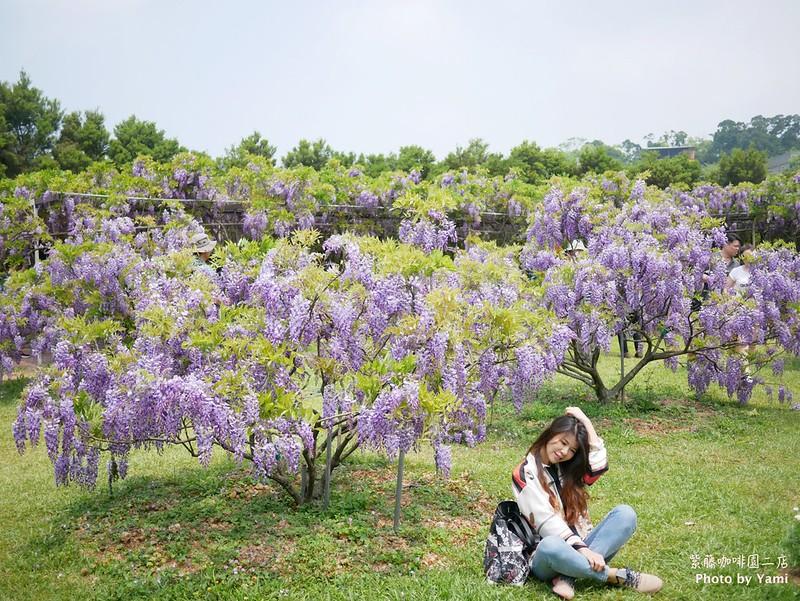 紫藤花咖啡園二店P1110304