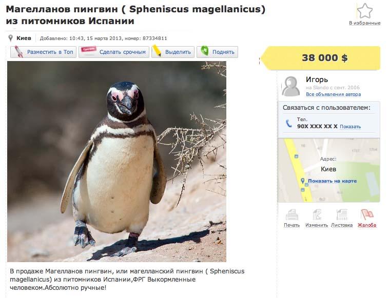 Купить пингвина