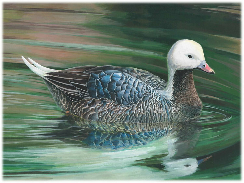 2018 Junior Duck Stamp Best of Show Art