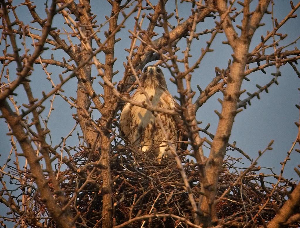 Christo in his ginkgo nest