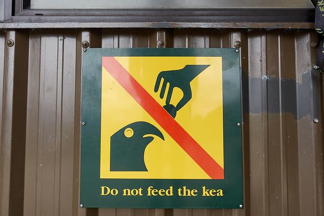 Do not feed the kea