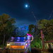 Woody Topiary by Pandry 2015