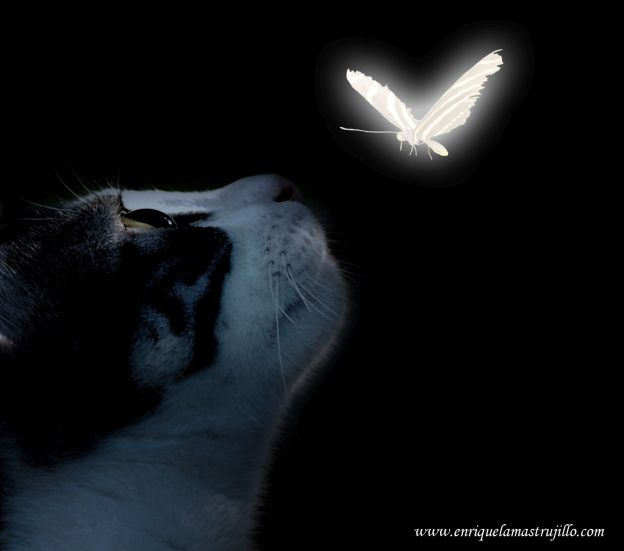 dixi-mariposa-vi-noche-negra-flickr