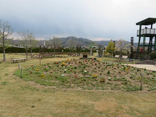 福島競馬場の内馬場の花畑