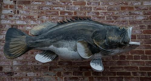 roadtrip unitedstates usa northcarolina roanokerapids us rockfish sculpture fiberglass roanokevalleyrocks sportfish publicart roanokecanalmuseum museum